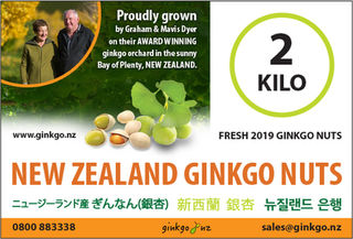 2 Kilo's Fresh Ginkgo Nuts